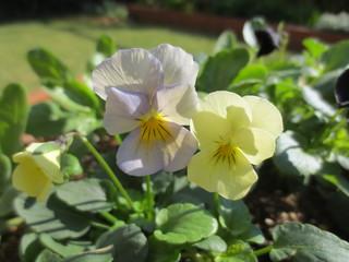 写真集 — 庭 3 — うつくしい花たち